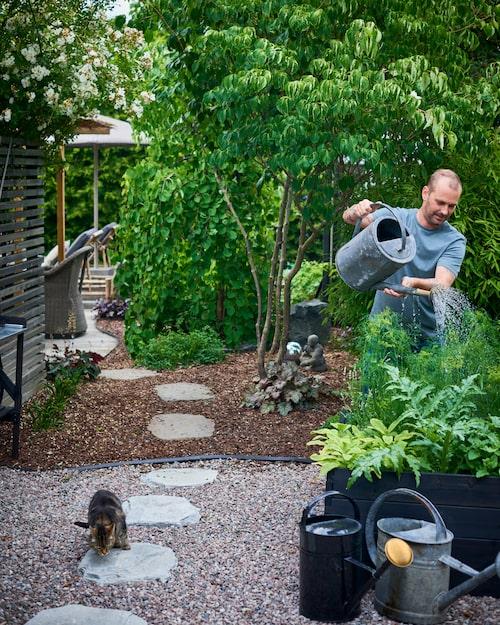 Kent får vattna en hel del i de svarta sålådorna under de varmaste dagarna. Men det är värt all möda då köksträdgården skänker familjen ekologiska grönsaker. Vattenkanna med mässingsmunstycke, House Doctor. Zinkkannor från Överjärva Byggnadsvård.
