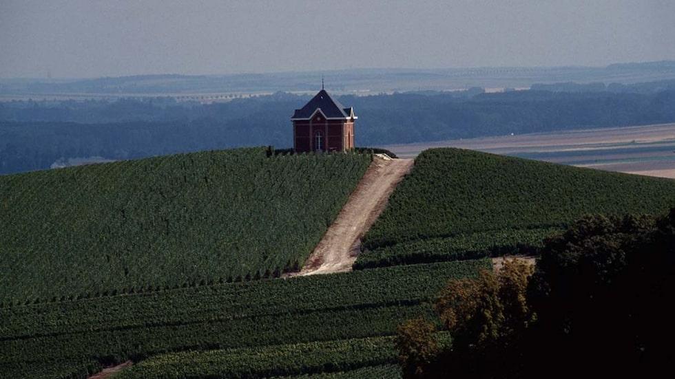 2015 utsåg UNESCO Champagnes speciella odlingslandskap, källarvalv och champagnehus till världsarv. Häng med på en resa genom vinområdet.