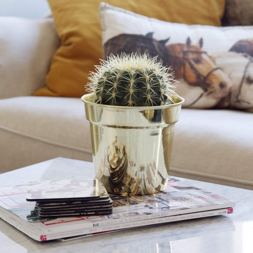 Dekorativt. Fin kontrast med kaktus i mässingkruka.