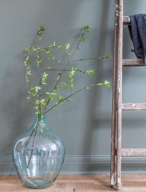 Två kvistar hägg som ännu bara har bladen utslagna blir vackra i en damejeanne på golvet. Fyll på med ljummet vatten och håll kvistarna fuktiga för att få dem att blomma.