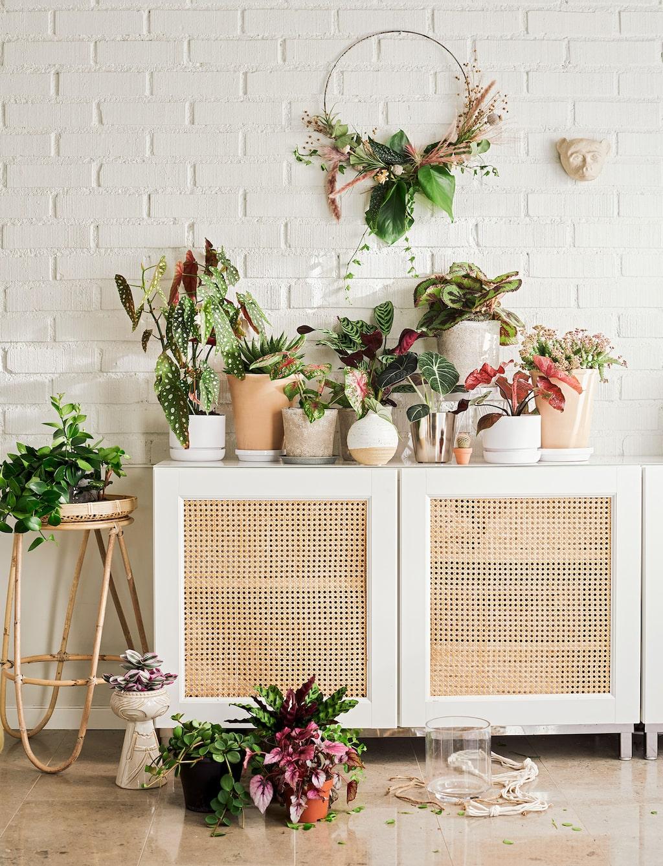 I år kommer vi få se extra mycket av krukväxter som har vackra blad som bryter av inredningen och blir en färgklick hemma.