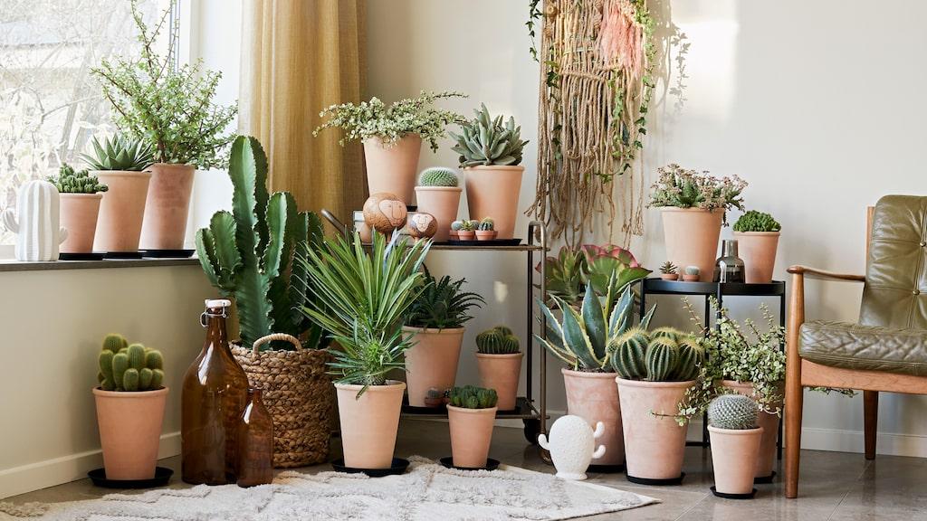 Årets trendigaste växter är bland annat stora bladväxter och lättskötta växter.
