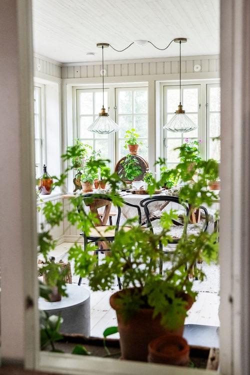 Från köket har man utsikt över den nybyggda glasverandan. Här var tidigare en yttervägg.