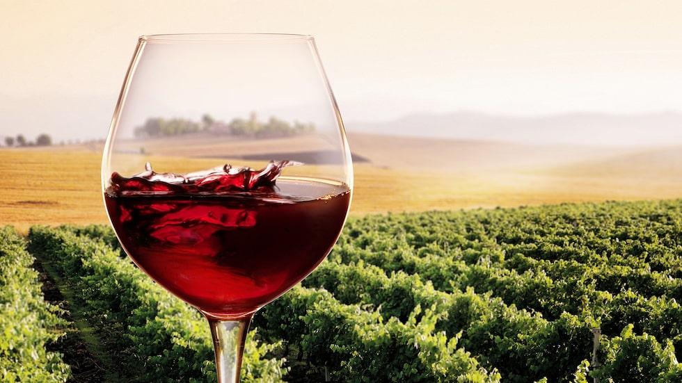 """Nya boken """"Château Vadå"""" har skapat storm i vinglaset. Somliga menar att Mats-Eric Nilssons vurm för naturvin är överdriven."""