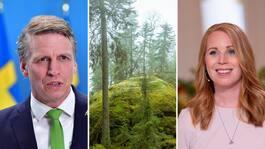 Miljökritiken mot Lööf: C:s krav katastrofala för miljön