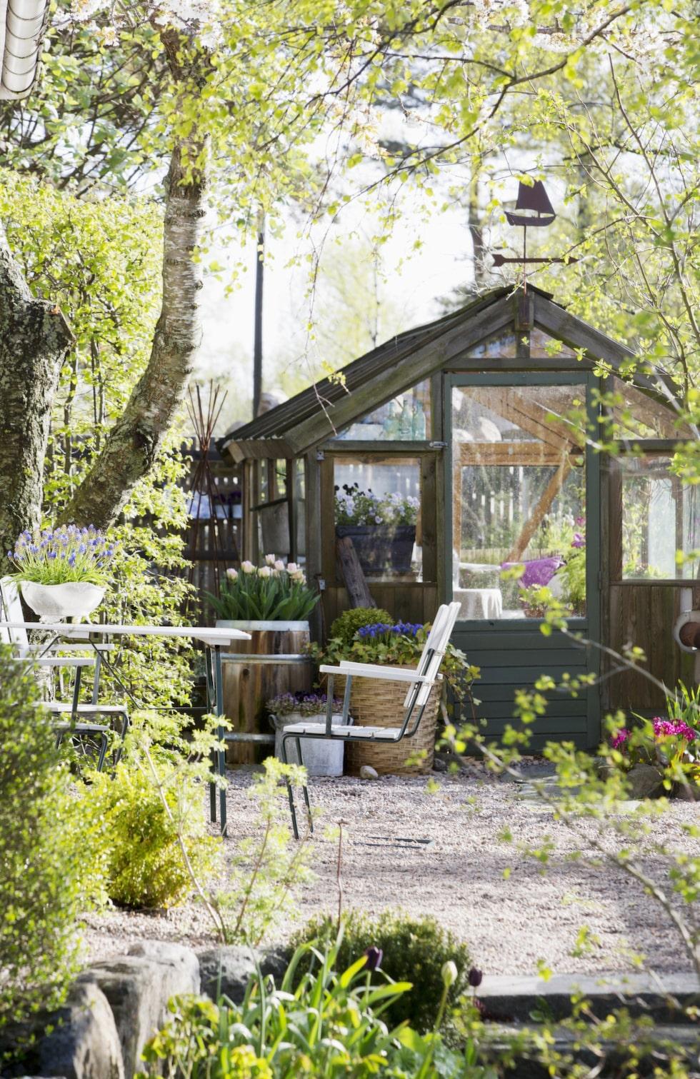 Växthuset fick Viktoria i födelsedagspresent av sin man, och är byggt med hjälp av en vän som är snickare.