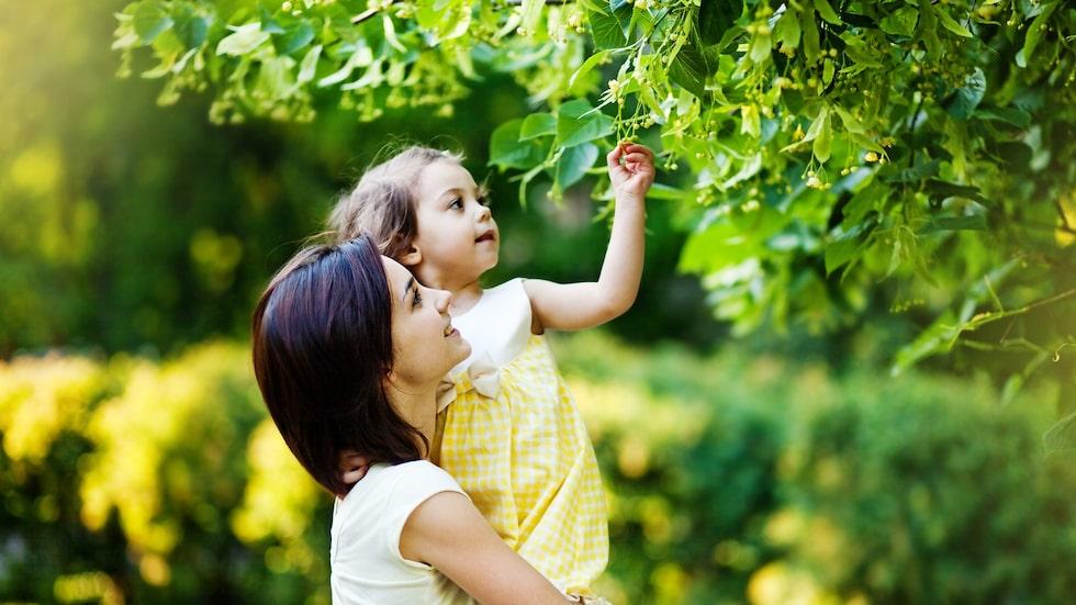 I den svenska naturen finns flera växter som kan orsaka svåra problem - som förgiftning och brännskadeliknande symtom.