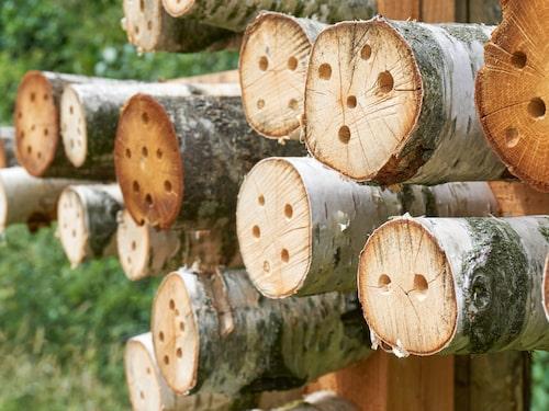 Vilda bin trivs i sandgropar och håliga plankor, kvistar, bambu och andra små krypin.