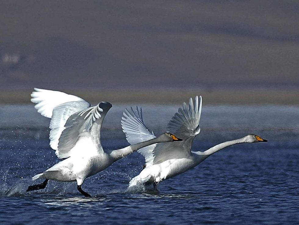 Kinas största sjö rymmer ön Bird Island där över 100 000 olika fåglar samlas under parningssäsongen.