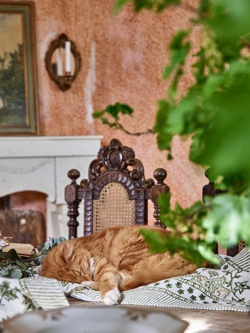 Katten Leopold tar sig en lur på matsalsbordet.