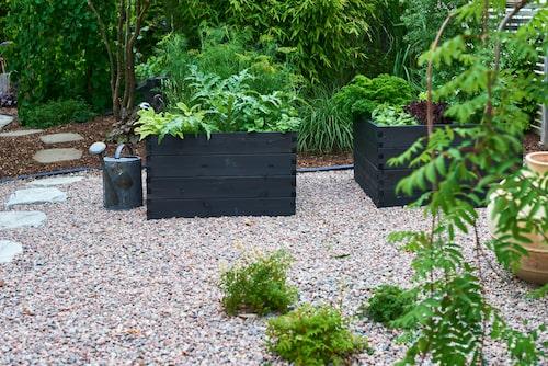 Trädgårdens nylagda köksträdgård med svarta pallkragar. De har staplats på varandra för att skapa höjd. Trampstenar i glimmerskiffer från Stenbolaget.