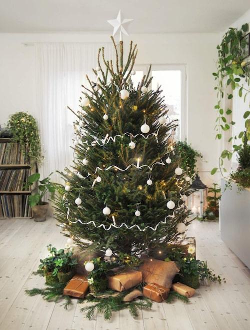 Många föredrar en äkta gran, mycket tack vare den härliga juldoften.