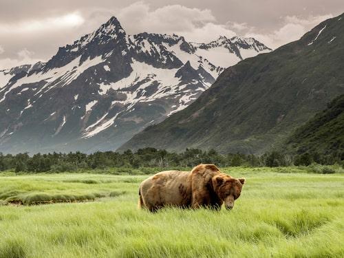 Alaska har drabbats av intensiva skogsbränder under 2010-talet.