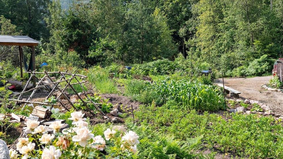 I dag drivs här en permakulturträdgård där det odlas allt ifrån squash och silverlök till potatis och spenat.