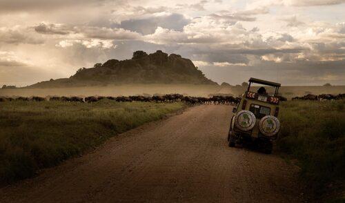 En av Serengetis största attraktioner är de stora hjordarna med djur i det öppna landskapet.