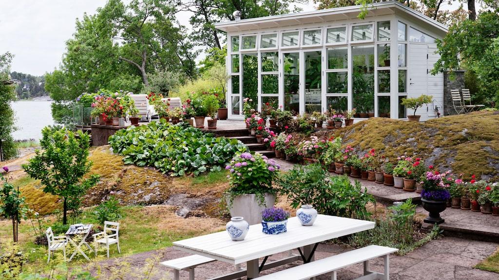 Trädgården på Värmdö var nästan helt övervuxen när Micael Bindefeld kom hit första gången. Växthuset har blivit kronan på verket på den kuperade tomten.