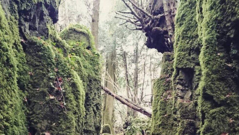 Skogen Puzzelwood hyser några av filmseriens figurer.