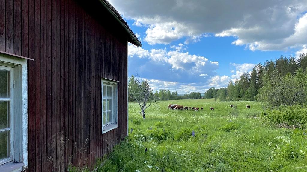 Fin utsikt över ängar och kossor. Fastigheten hade en tomt på 4 341 kvadratmeter.