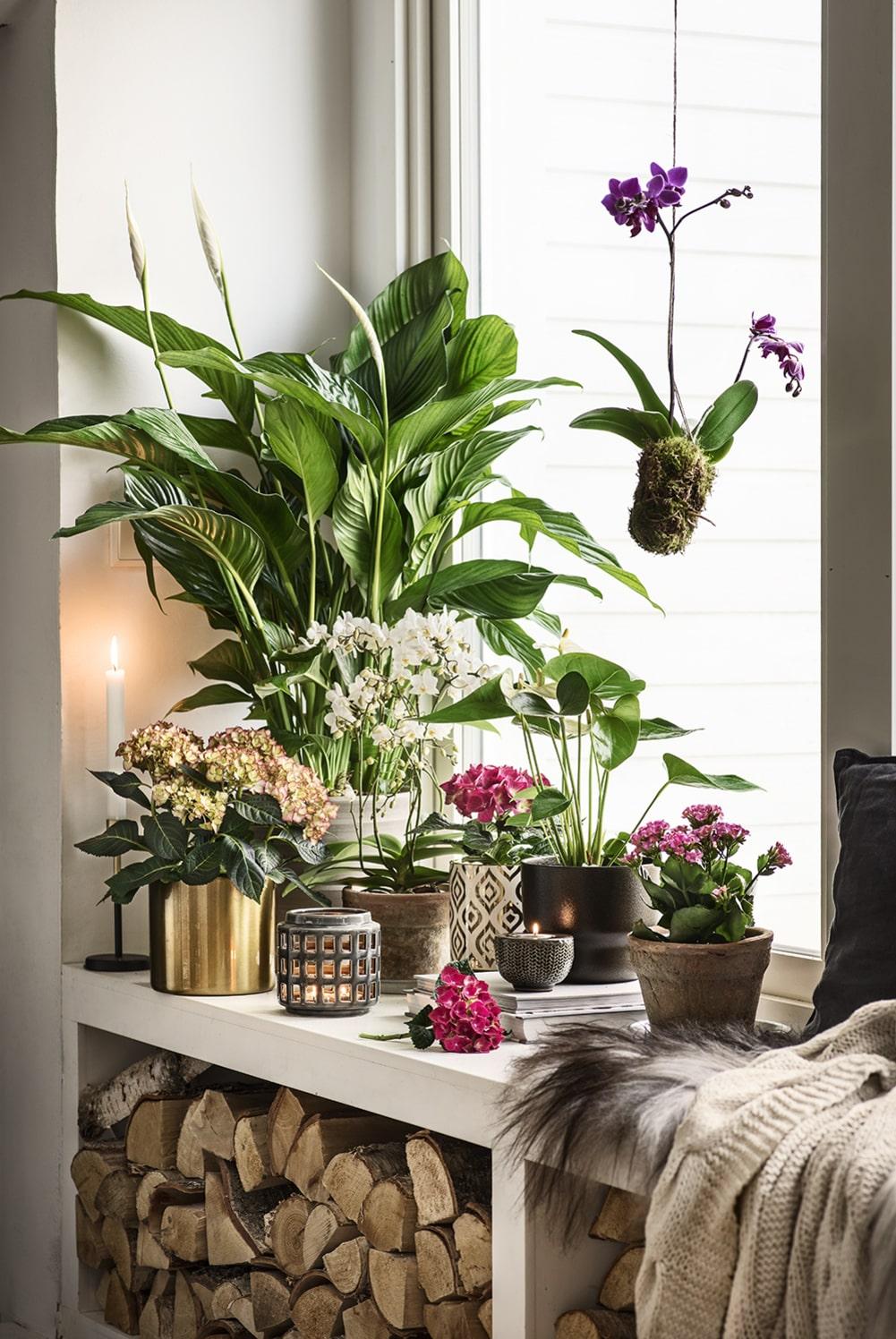 Skapa helhetsintryck och placera i grupp. Har du en enkel växt kan det kännas tomt och trist om den står ensam. Plantera då flera växter i samma kruka eller placera flera i grupp.