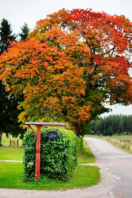 Sjons heter gården utanför Krylbo i södra Dalarna. I bakgrunden syns grinden ut till kohagen.