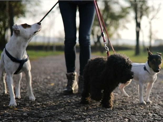 Återkommande attentat mot Malmös hundar