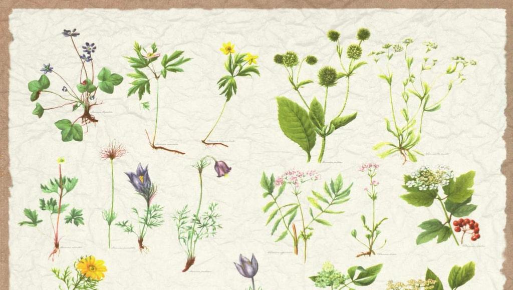 Linda Pålemo, designansvarig på Mr Perswall, berättar hur hon inspirerades av en växtbok från 1800-talet. Beställs enligt egna måttönskemål, 315 kronor per kvadratmeter, mrperswall.se.