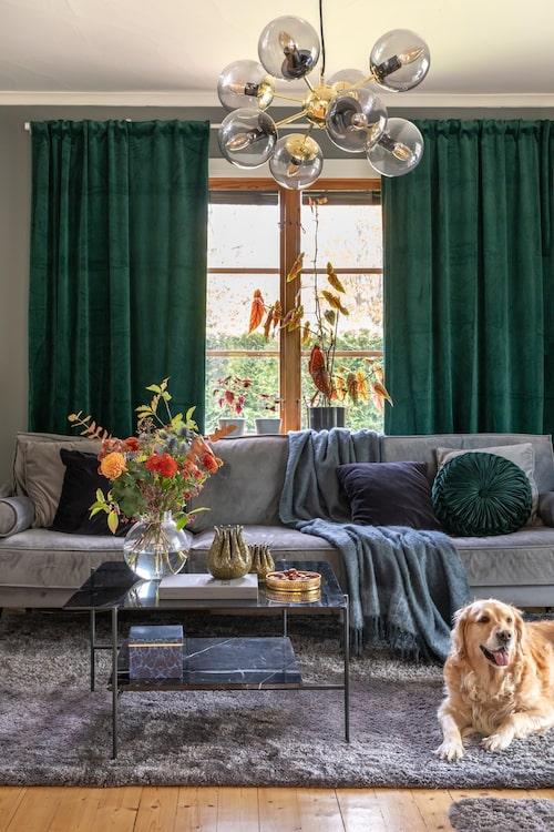 Det gröna och gråa är fint tillsammans. Hunden Nelly trivs utmärkt i huset.