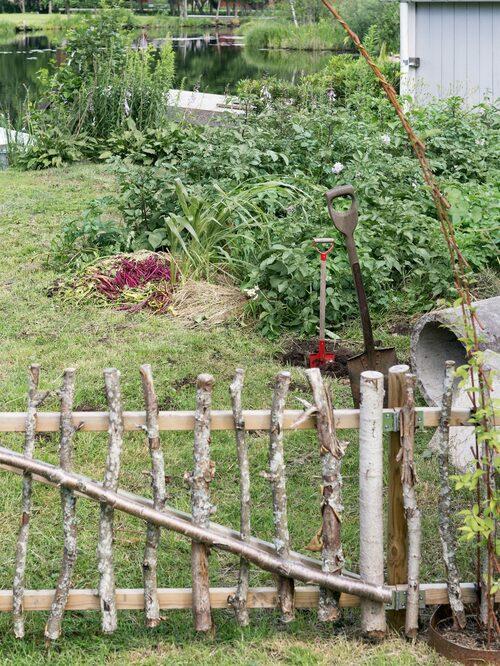 Lina och Robin har hägnat in köksträdgården med ett staket som de gjort av sly och reglar.Klematis klättrar på en båge av armeringsnät.