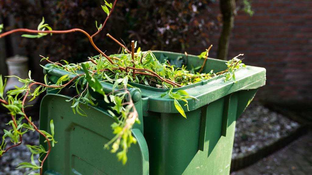 """""""Släng aldrig växtrester i skogen eller utanför tomten. Om man vet att de växter man har kan bli ett problem ska man alltid köra dem till återvinningen som tar hand om trädgårdsavfall"""", säger experten Mora Aronsson."""