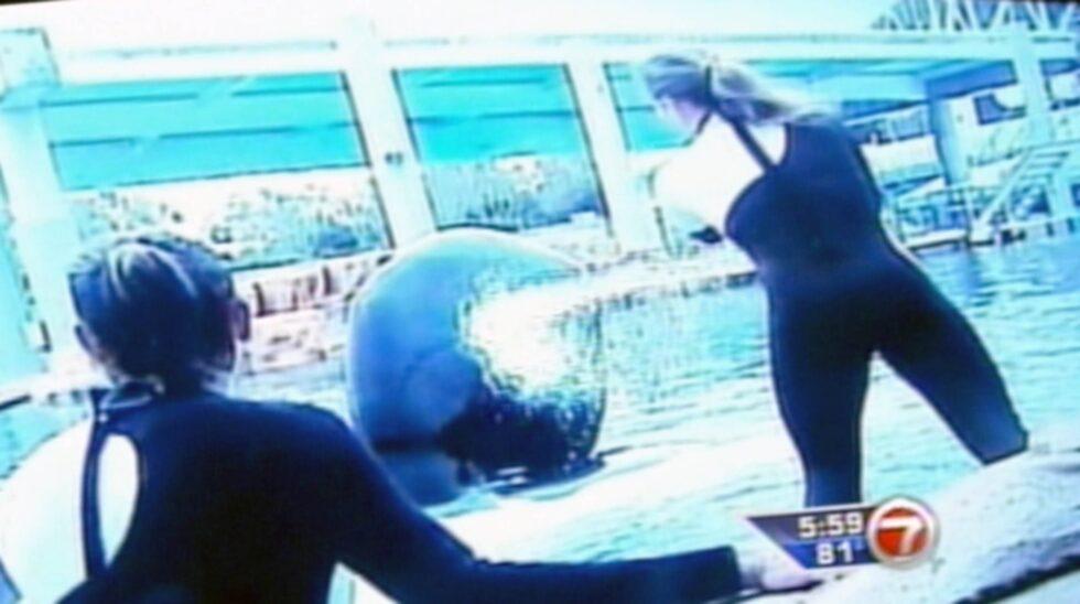Rutinerade tränaren Dawn Brancheau, 40, dödades den 24 februari 2010 av en späckhuggare mitt framför ögonen på tusentals besökare.