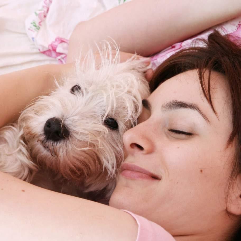 <strong>9. Älskar dig villkorslöst</strong><p>Din hund älskar dig villkorslöst.  Även om du är ledsen eller arg så vill de ge dig kärlek. De förlåter dig  också även om du har betett dig. Att älska villkorslöst är något vi  människor skulle ha nytta av och göra världen till en bättre plats.</p>
