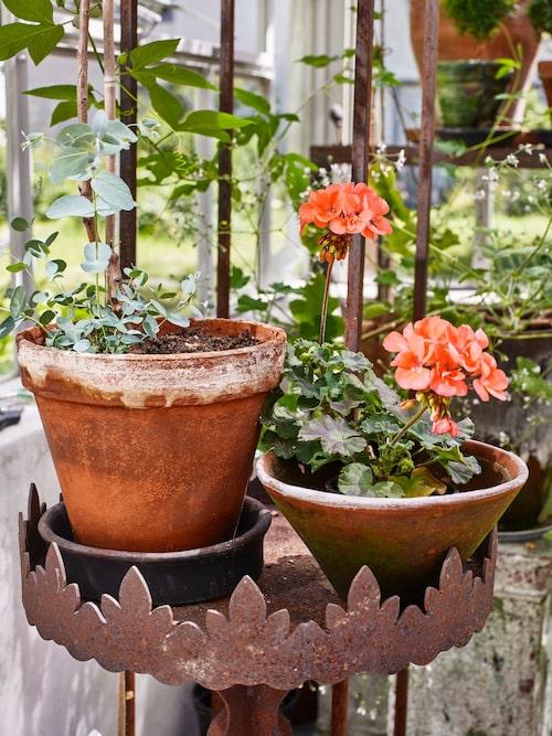 Få dina blommor att trivas i dina gamla strumpbyxor.