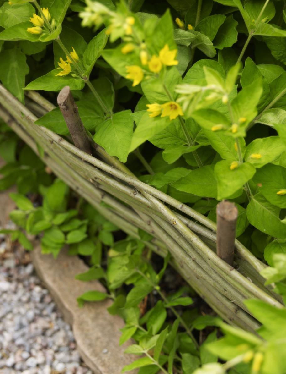Ett lågt litet staket ramar in rabatter och trädgårdsland på ett trevligt sätt. Klipp till de pinnar som ska stickas ner i jorden, de bör vara något tjockare än de andra. Sätt dem med cirka 20 centimeters mellanrum. Sen flätar du staketet med de längre pinnarna genom att lägga varannan framför och varannan bakom de stående pinnarna tills du har den längd och höjd på staketet du önskar.