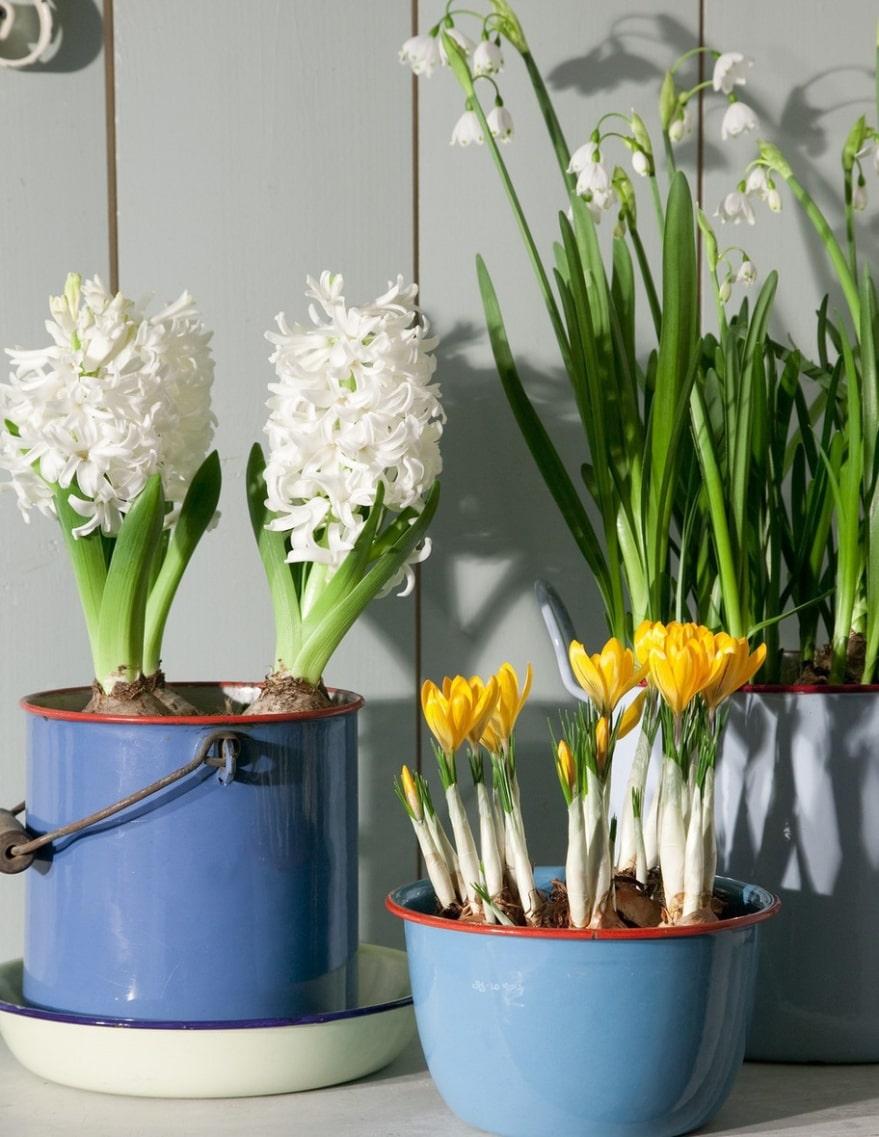 Häftigt. Emaljerade blanka skålar i glada färger blir häftigt tillsammans med krokus, hyacinter och snöklockor.