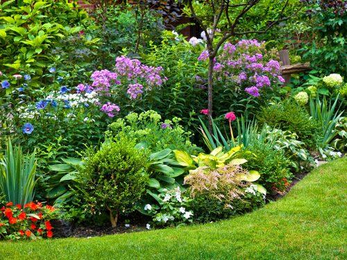 Det är smart att plantera olika växter som blommar olika tider, för att få rabatten fin under hela säsongen.
