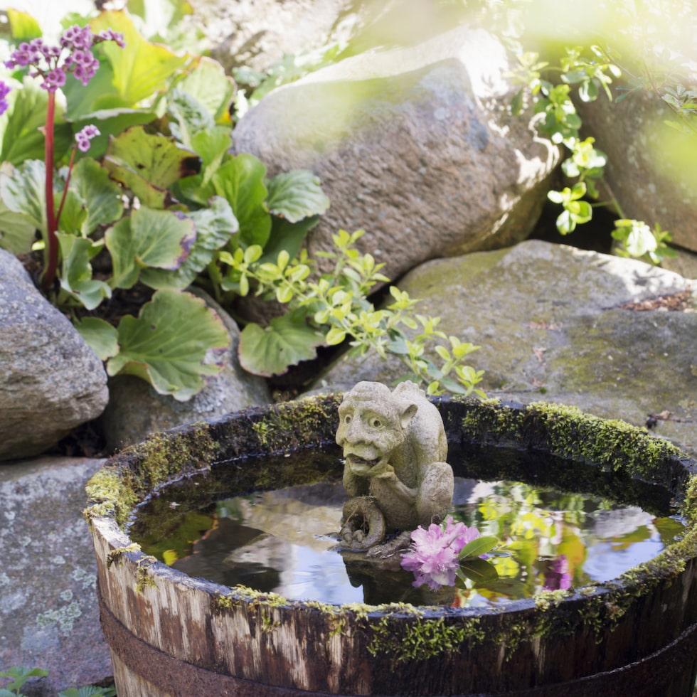 Den som inte har en damm kan enkelt skaffa sig lite vattenblänk i en gammal tunna. Bergenian lyser upp i stenröset bakom.
