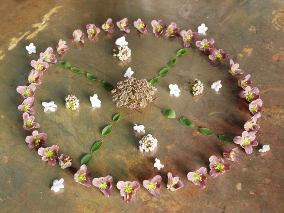 Egen mandalaGör ett mandalamönster av blomblad. Placera på ett dukat bord eller fotografera och gör egna prints.