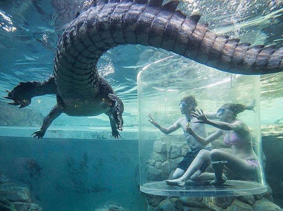 Crocosaurus Grove i Australien har badvänliga krokodiler.