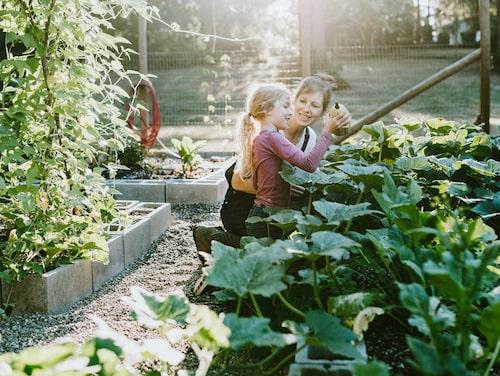 Gräv ner bokashin i ditt trädgårdsland eller pallkrage. Jorden kommer belöna dig med frodig växtlighet.