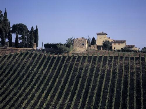 Det är inte bara gamla adelsätter som gör vin i Toscana. Området har dragit till sig vinälskare och investerare från hela världen.