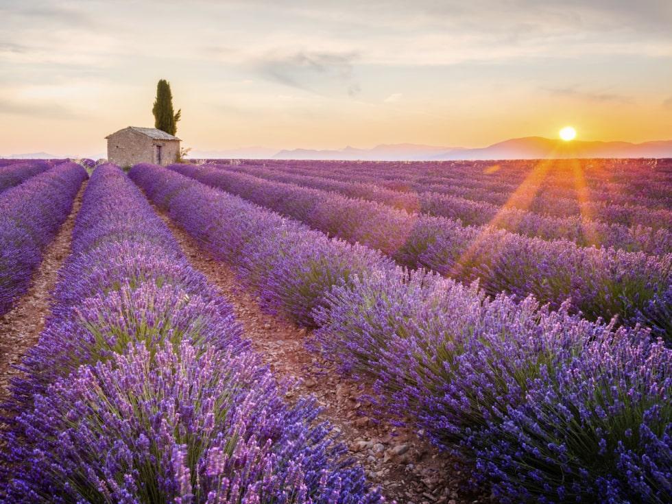 Provence är en resa för alla sinnen. Perfekt att åka hit när lavendelfälten blommar i juni.