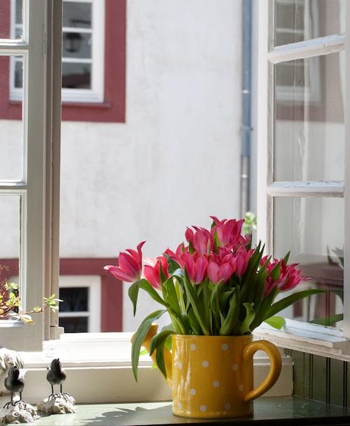 Att vårvädra är härligt men är också något som medför en viss risk att få in ohyra som mal i hemmet.