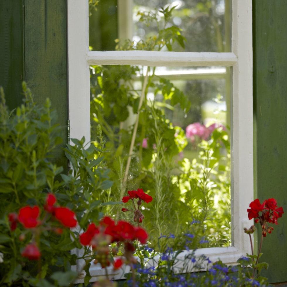 Fasaden/stommen målades i grönt och taket byggdes av råspont som täcktes med takpapp. Blommor i krukor finns både i och utanför växthuset.