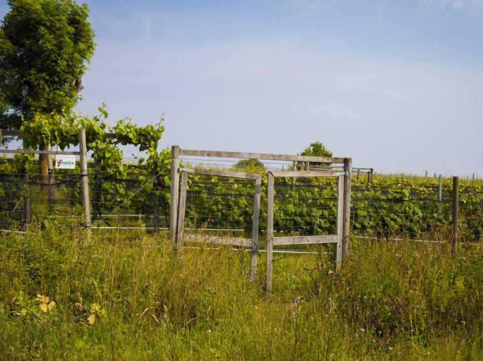 En mil norr om Borgholm hittar man Wannaborgs vingård.