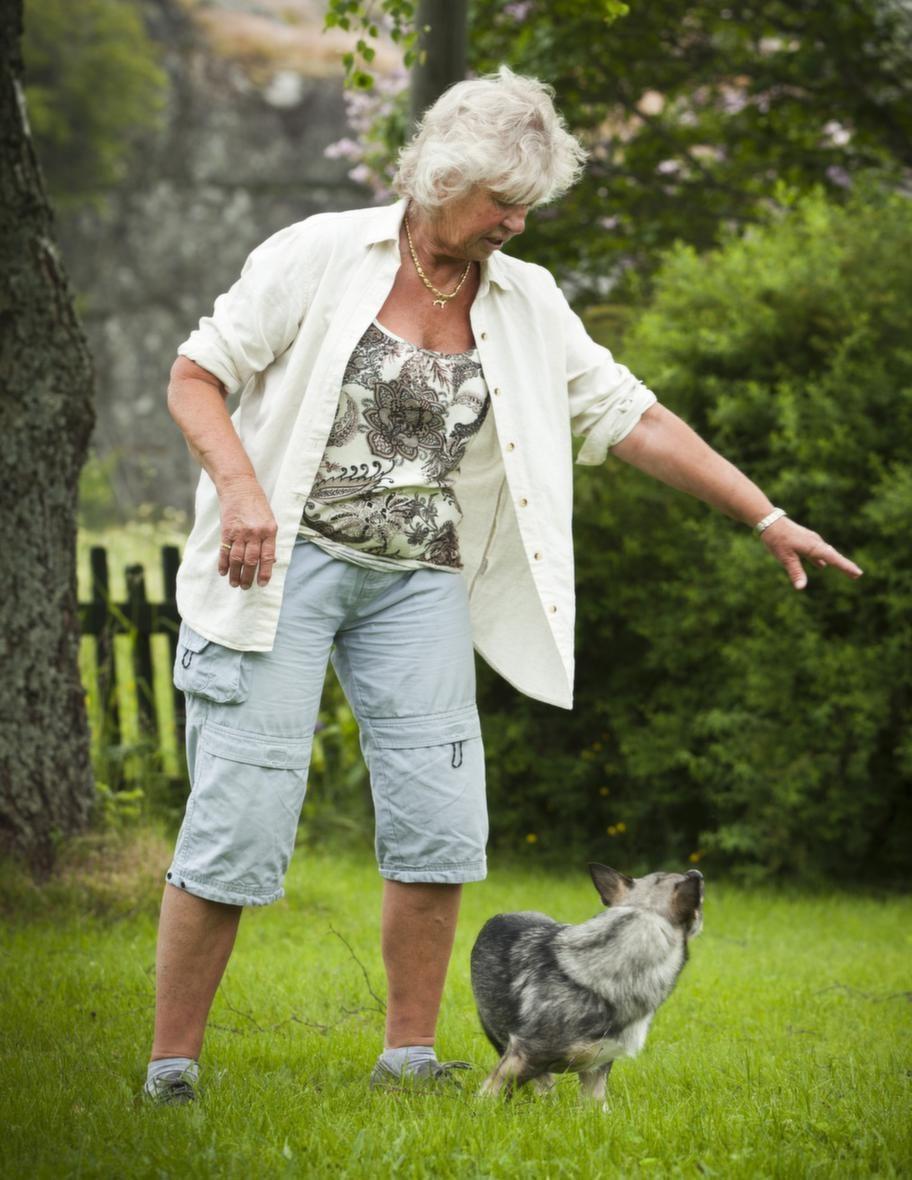 TRICK: SNURRA RUNTSteg 2: Visa med armen. Använd   inget synligt lockbete, men visa med armen och belöna som tidigare.  Öva  åt olika håll så att du ser att hunden kan följa din armrörelse.