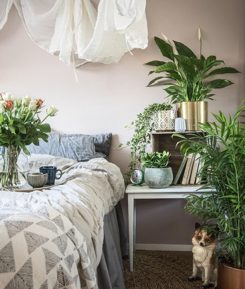 Vi tänker mer och mer på vad vi stoppar i oss och strävar efter giftfria liv. Där kommer dethr med luftrenande växter också in. Några av de mest populära luftrenarna är fredskallan, paradisträdet, kantdracenan, bergpalmen och murgrönan.