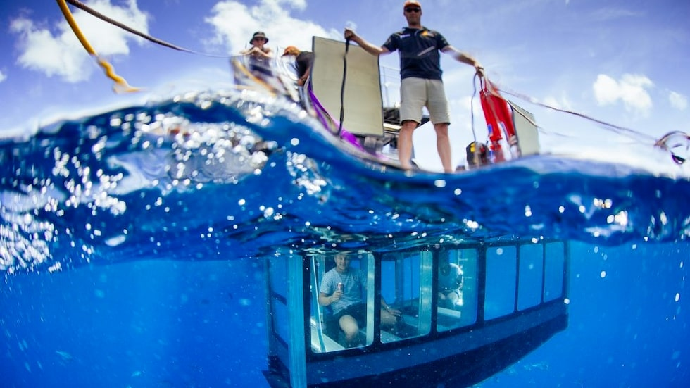 Trygg och torr, på första parkett i hajens naturliga miljö.