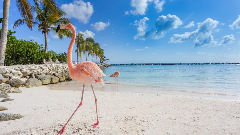 Paradisön Aruba är med på listan.