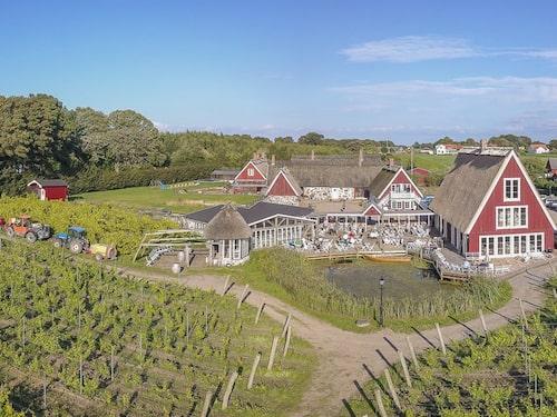 Arilds vingård är nu den största i Sverige.