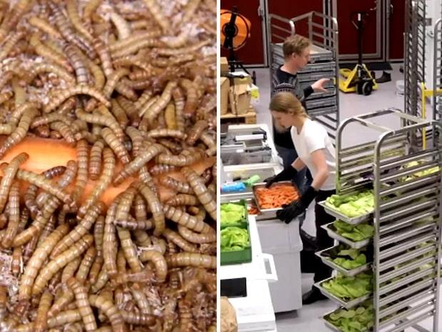 Nu får vi äta insekter - Möt Sveriges insektsentreprenörer
